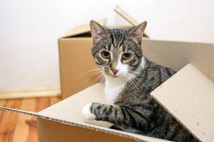 kat verhuizen, verhuisbedrijf Rotterdam